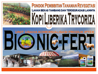 Bibit Kopi Liberika ber-Trychoriza